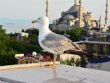 Весенний календарь событий в Турции